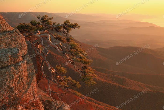 Pine tree on a cliff in the mountains