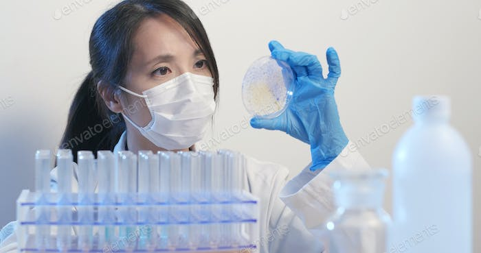 Microbiological laboratory work, Scientist holding petri dish for record