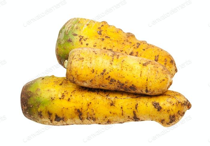 pile from organic uzbek yellow carrots isolated