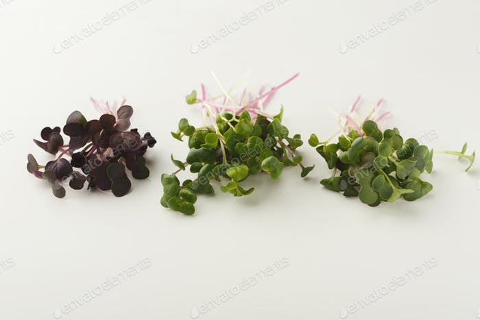 Micro greens variety at white background