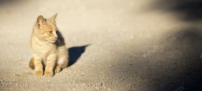 Cat shelter, rescue concept