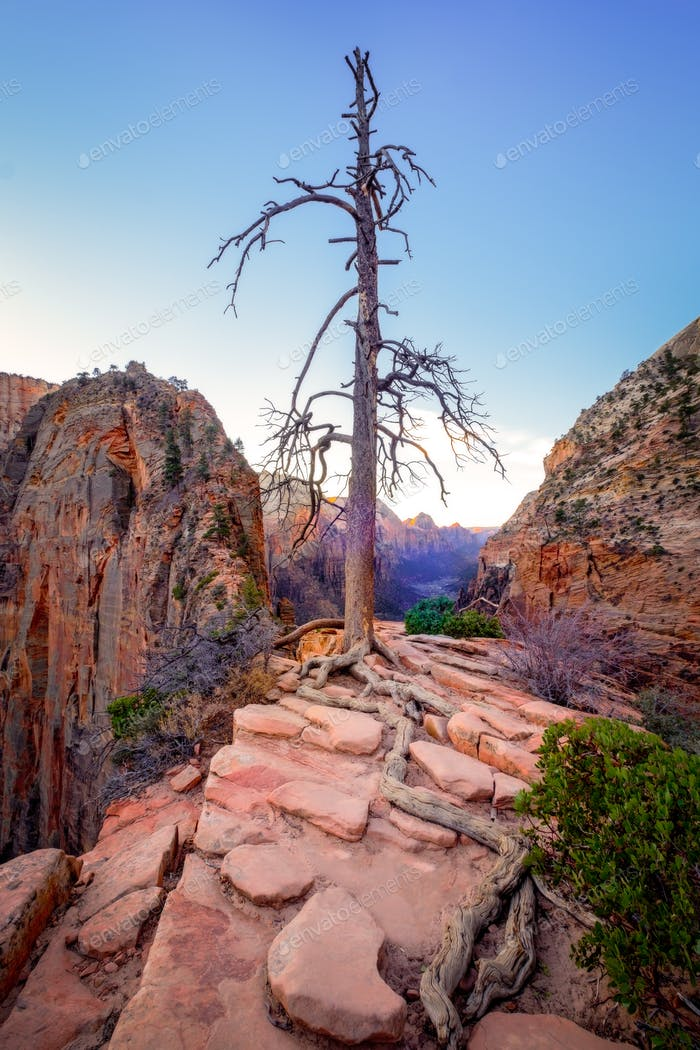 Zion valley sunrise landscape view with dry tree, Utah