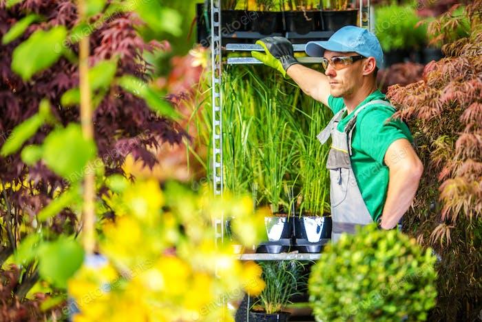 Gewächshaus Gardening Konzept