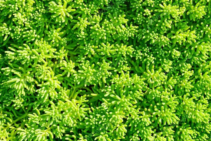 Green decorative grass background
