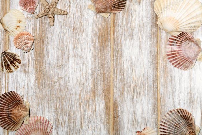 Frame of seashells