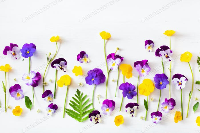 beautiful pansy summer flowers flatlay on white