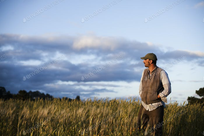 A man standing looking over crop fields at the Homeless Garden Project in Santa Cruz.