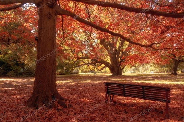 wooden bench in city park autumn season