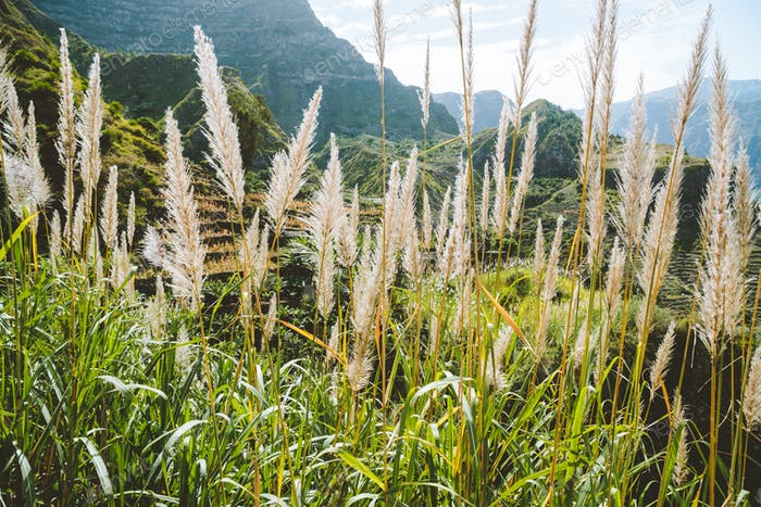 Santo Antao, Cape Verde. Sugar plantation on the greenest and northernmost island in Cape Verde