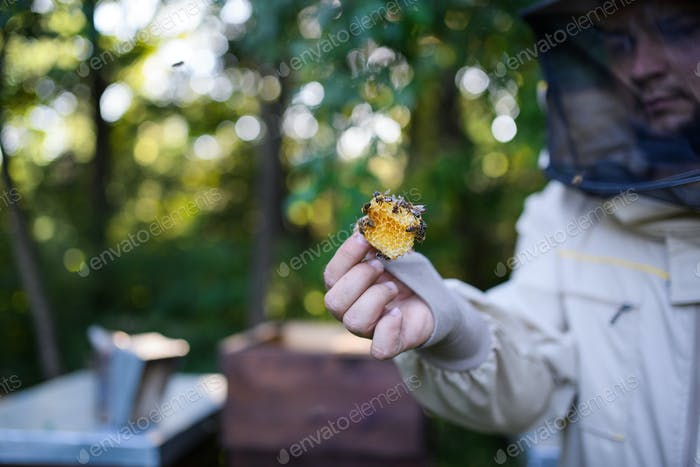 Man beekeeper holding piece of honeycomb with bees in apiary