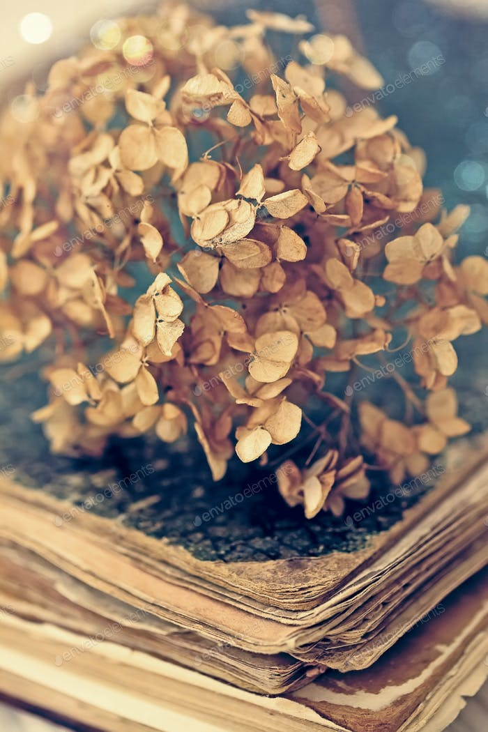 dried hortensia on an old book