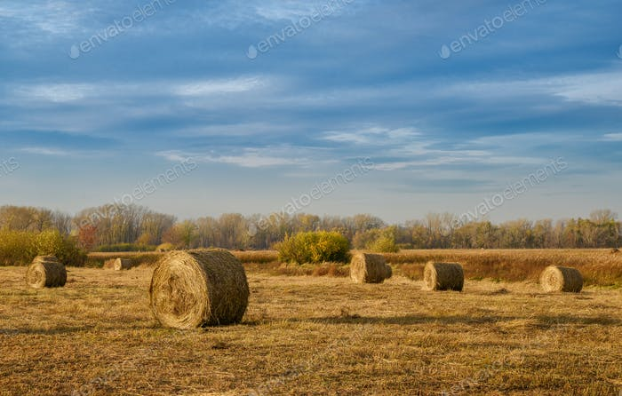 Hay bales in a autumn field