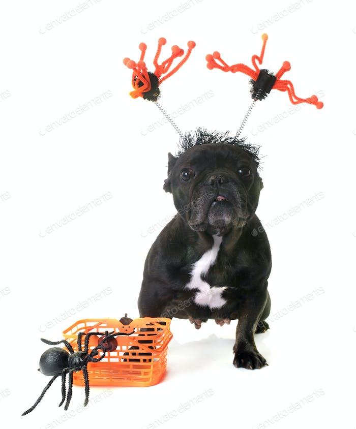 french bulldog and halloween