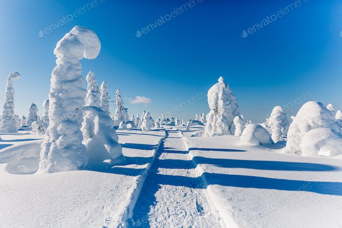 Beautiful snowy winter landscape. Snow covered fir trees on the background.  Finland, Lapland