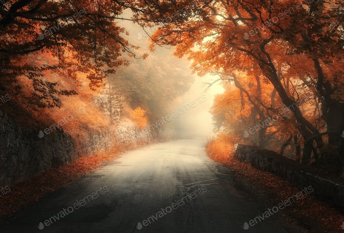 Mystical autumn red forest with road in fog