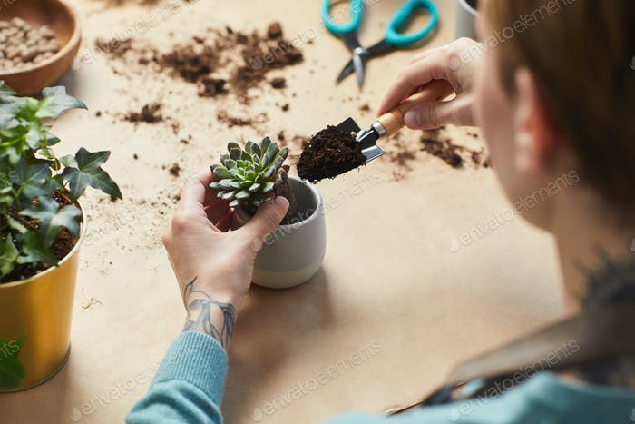Unrecognizable Woman Potting Succulents