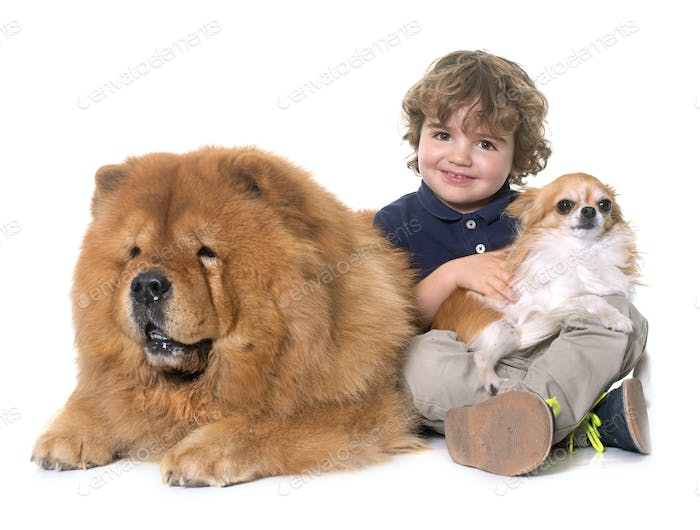 chow chow, chihuahua and little boy
