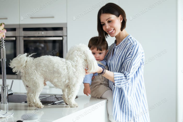 Pretty mother with her baby looking at the dog that is on the kitchen countertop at home.