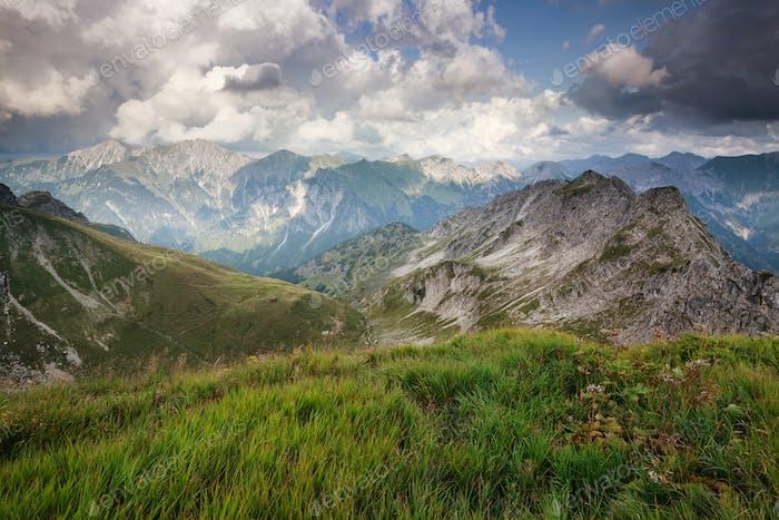 alpine green meadows in summer