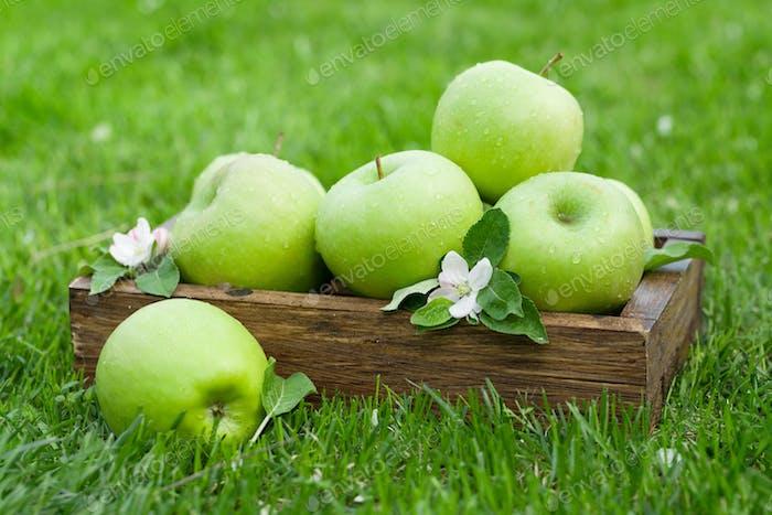 Fresh garden apples in box