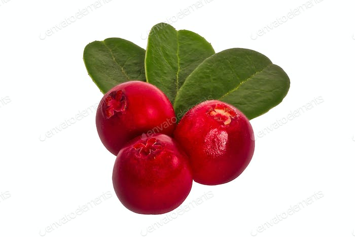 Cranberries with leafs on a white background