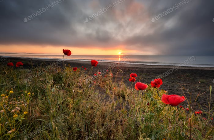 Seascape with poppies