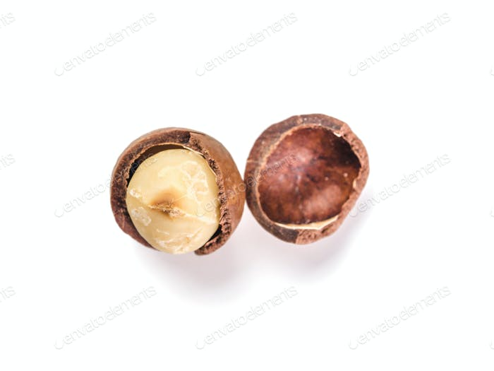 Macadamia nut with open shells, isolated, top view