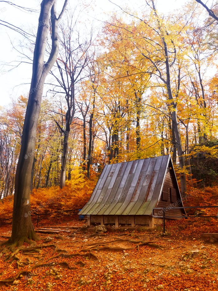 Autumn morning. Red and golden trees in the forest with a wooden forester house, Poland