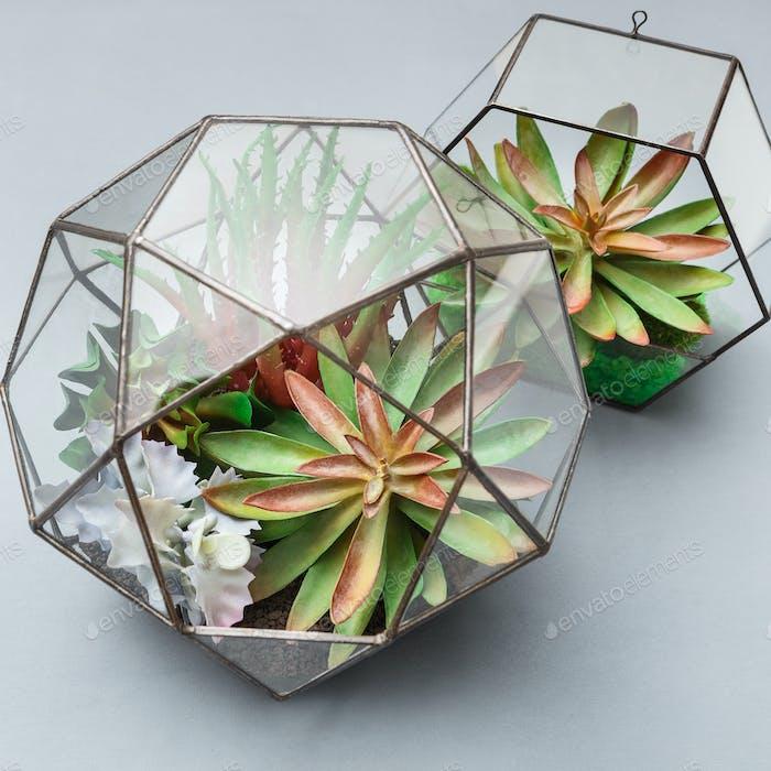 Mini garden in two glass geometric florariums