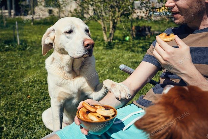 Dog begging at eat