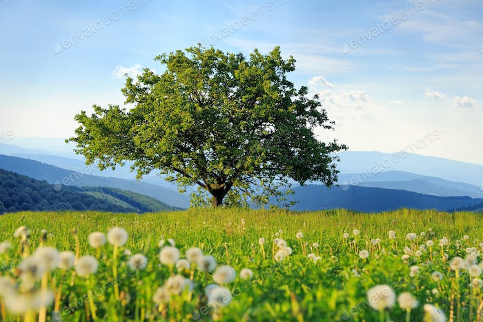 Summer landscape with nobody tree