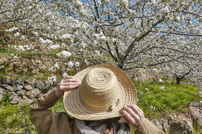 Woman looking up cherry blossom in Jerte Valley, Caceres. Spain. Season