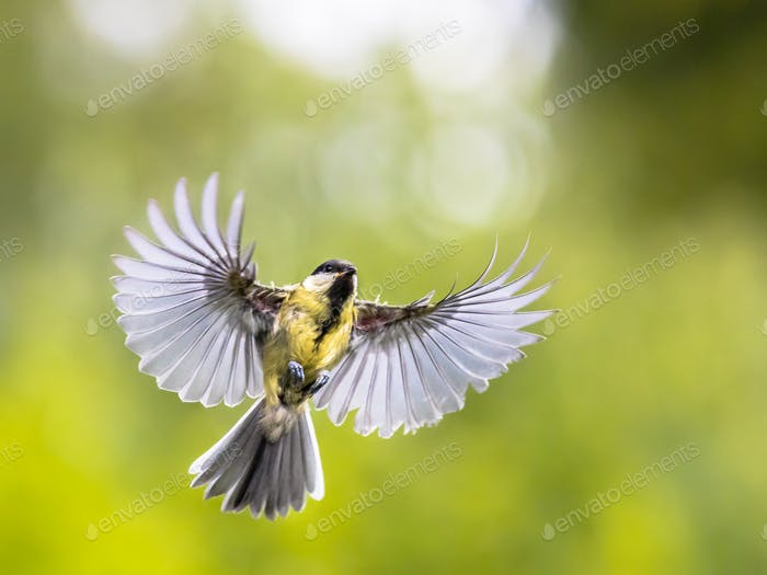 Bird in flight on green garden background with copy space