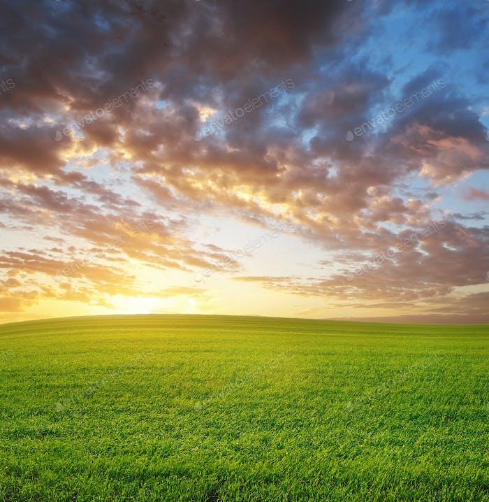 Sunrise in grean meadow.