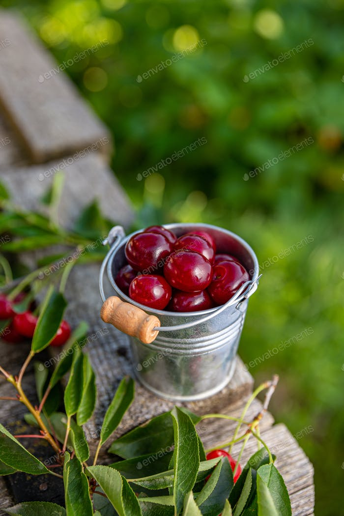 Delicious sour cherries