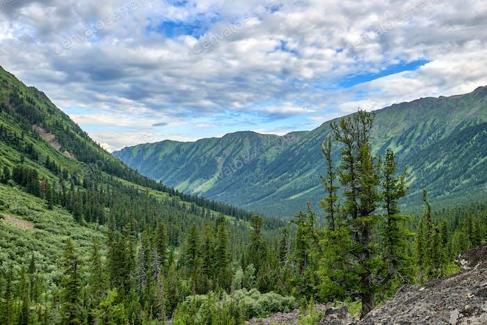 Dark Coniferous Mountain Taiga in Eastern Siberia