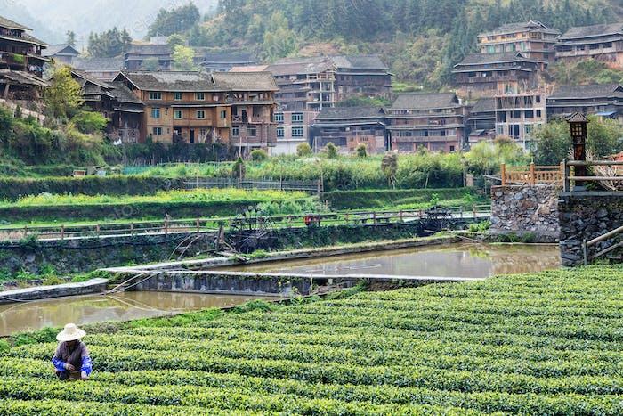 Teeplantage und Bewässerungskanal in Chengyang