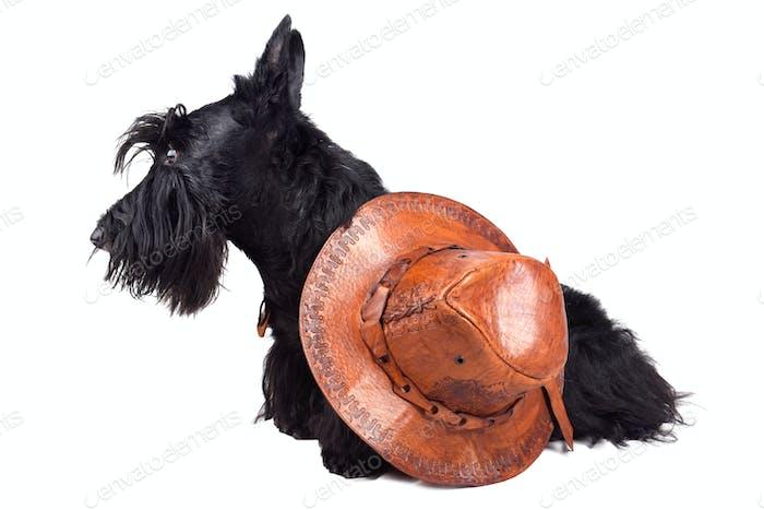 Sitzender Scotch Terrier