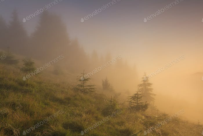 Misty dawn in the mountains