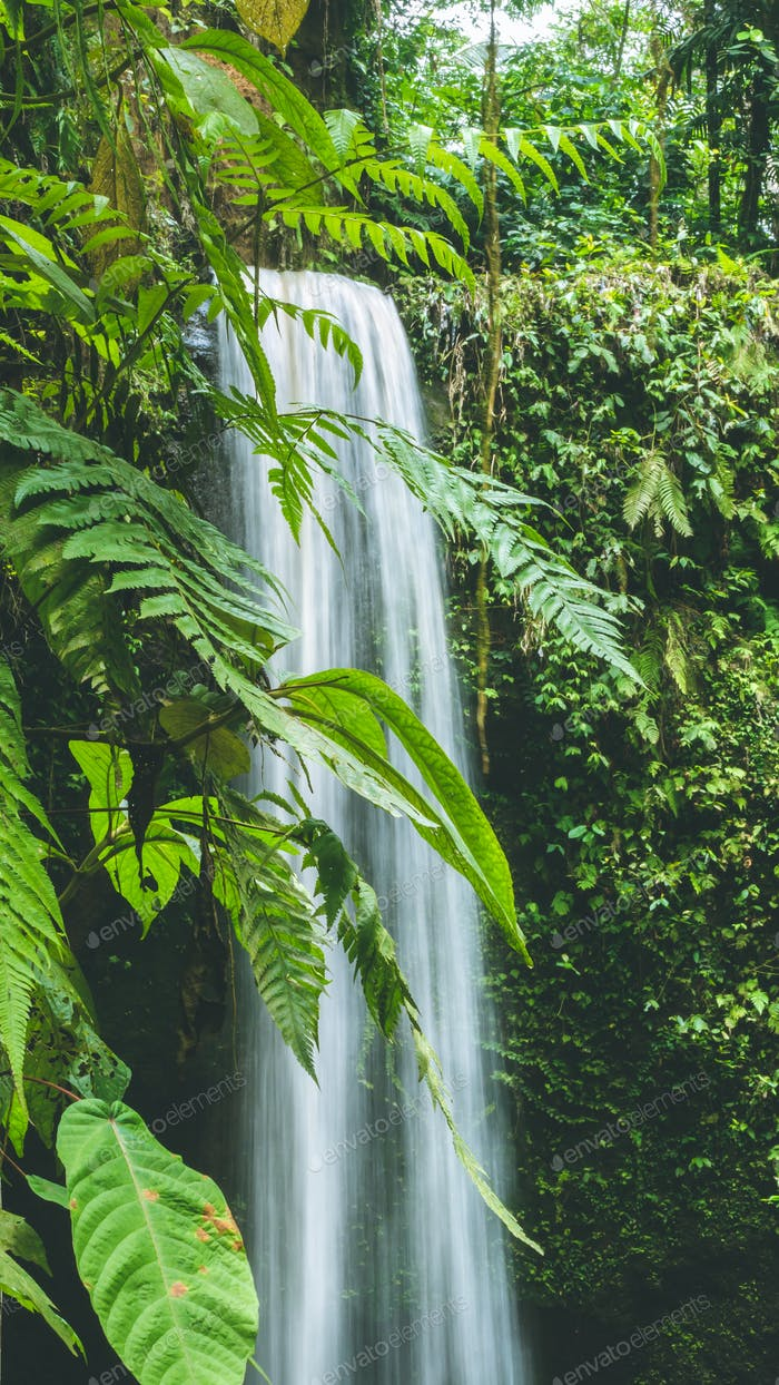 Close up of Waterfall hidden in lush jungle leaves, Bali, Indonesia