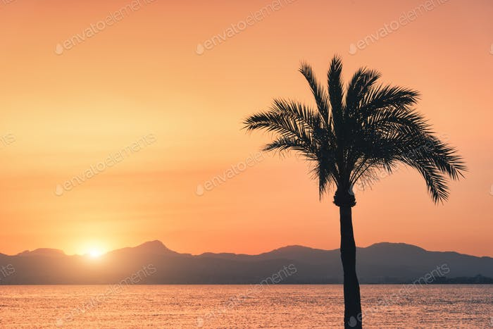 Silhouettes of palm trees against colorful sky at sunset