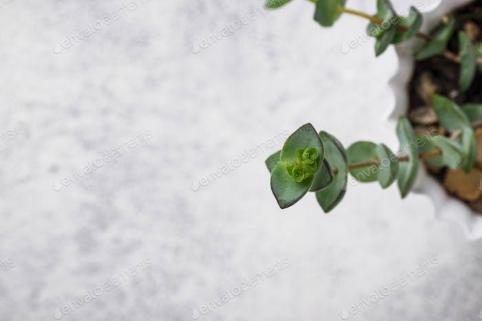 Grüne Pflanze auf hellem Hintergrund
