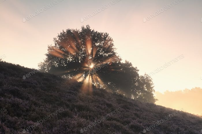 sunbeams through tree on hill