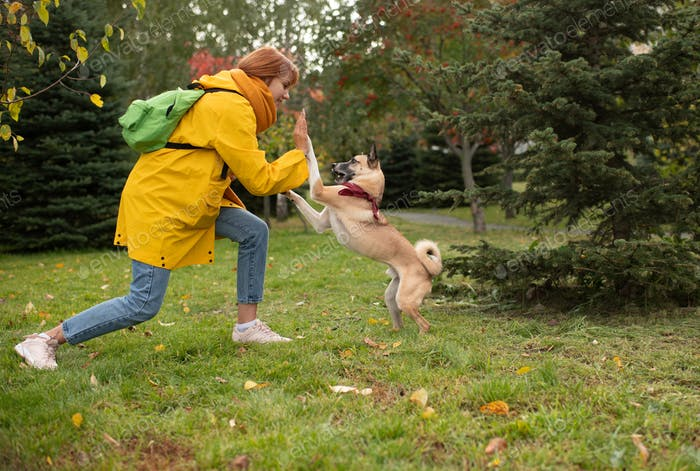 Young woman giving high five to dog