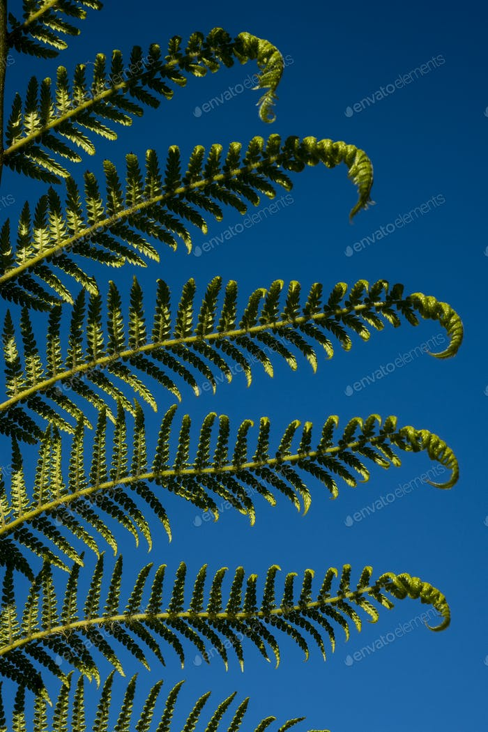 Close up of the leaf of a palm tree against a clear blue sky.