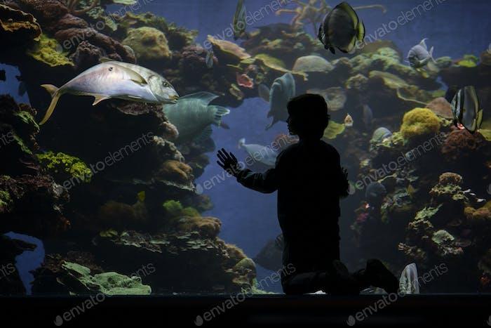 Anonymous child admiring fish in oceanarium