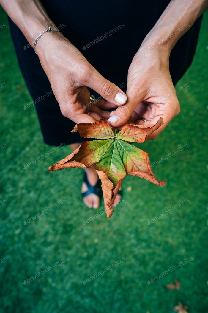 Woman hold nice yellow leaf in hand.