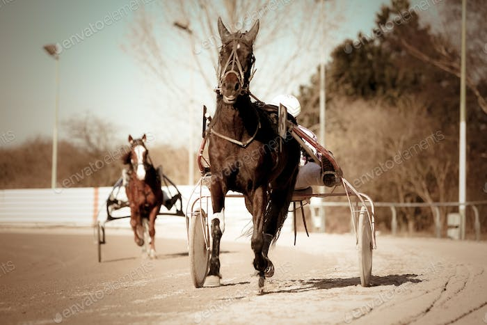 Thumbnail for Harness Racing .horse