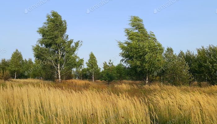 Beautiful autumn landscape with herbs and birches