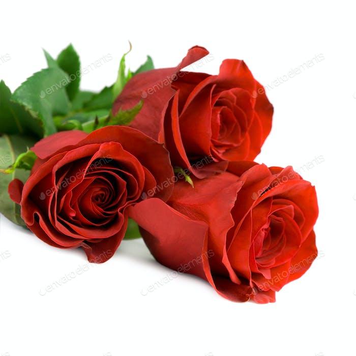 Rote Rosen.